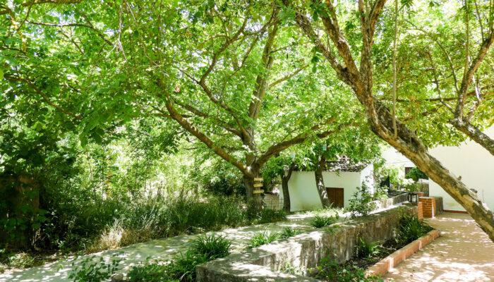 Der schattige Weg unter Granatapfelbäumen führt vom Pool an der Terrasse des Casa Vegana vorbei zur Cabaña