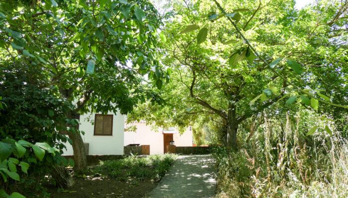 Der schattige Weg unter Walnussbäumen führt vom Fluss an der Cabaña vorbei zur Terrasse Casa Vegana
