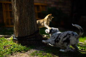 Snapshot of young Pumpkin and Josie playing